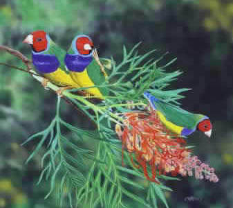 3gouldianfinches