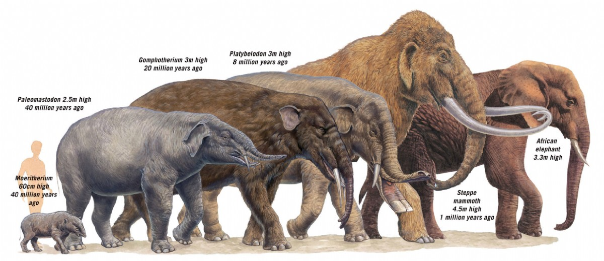 The Fine Art of Paleontology – The Rise of the Elephants ...